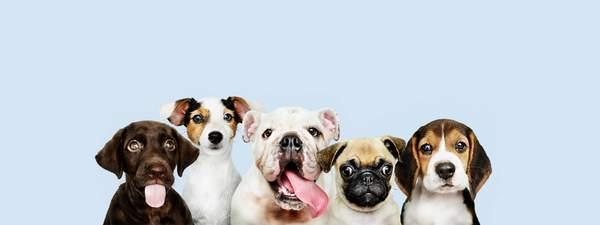Marketing digital pour animalerie